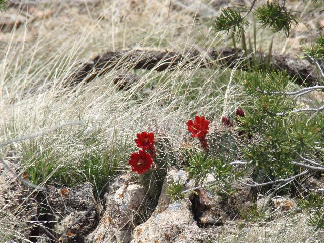 Flowers at Walnut Canyon
