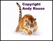 See lots more fabulous pics at the Andy Rouse Website