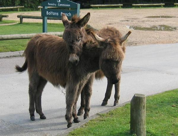 Donkeys at Boltons Bench