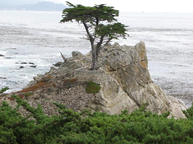 Lone Cypress Tree,  17 Mile Drive