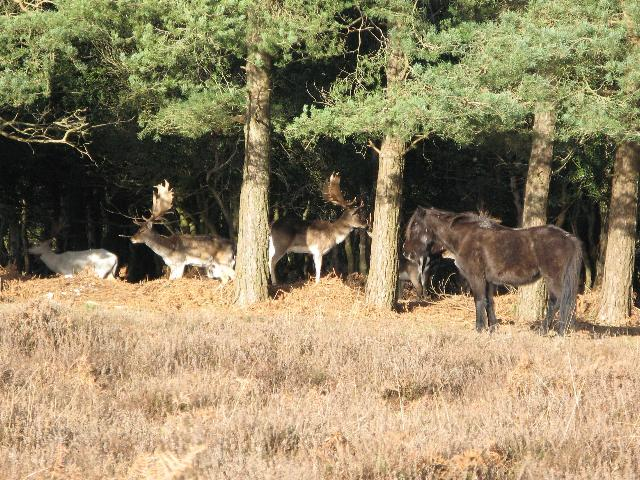 A pony shares space with deer, picture taken from roadside.