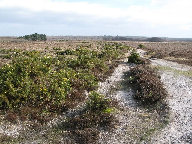 A walk across the heathland