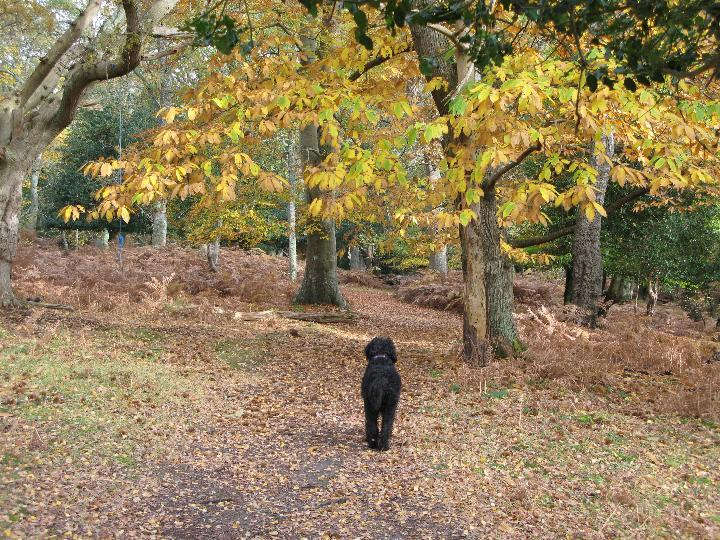 Autumn Matley Woods