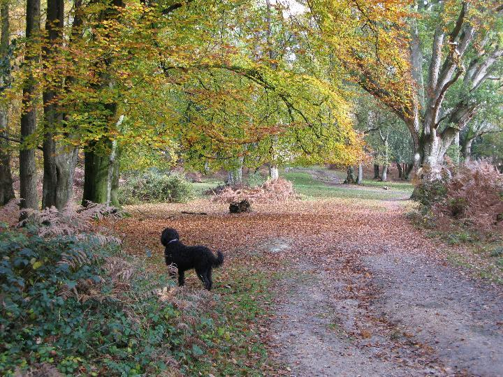 Autumn in Matley Woods